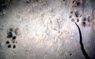 Gato mont�s europeo/Felis silvestris